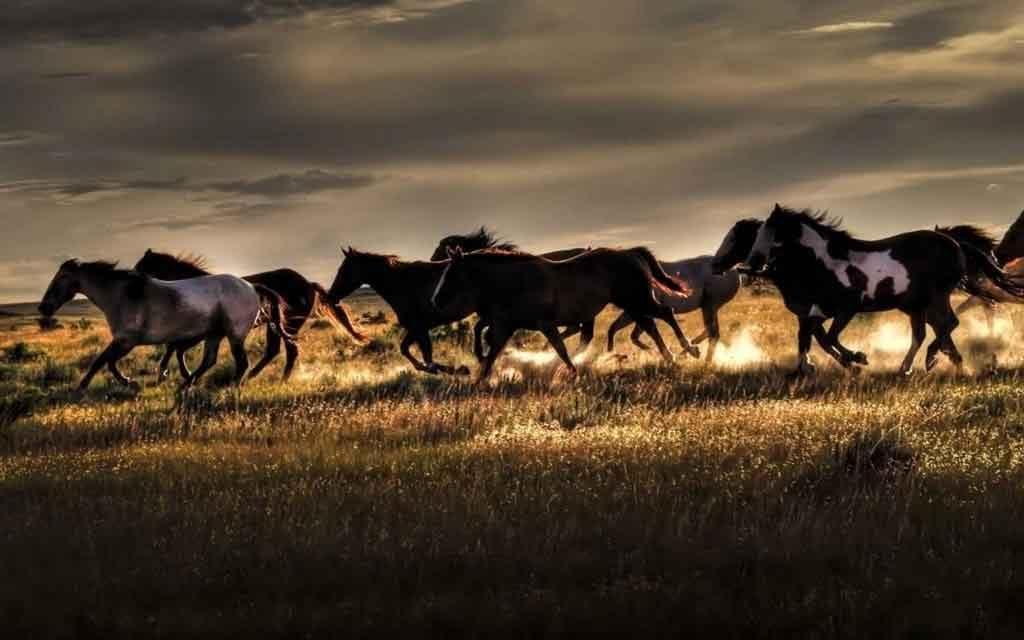 Leggenda dei cavalli fatati