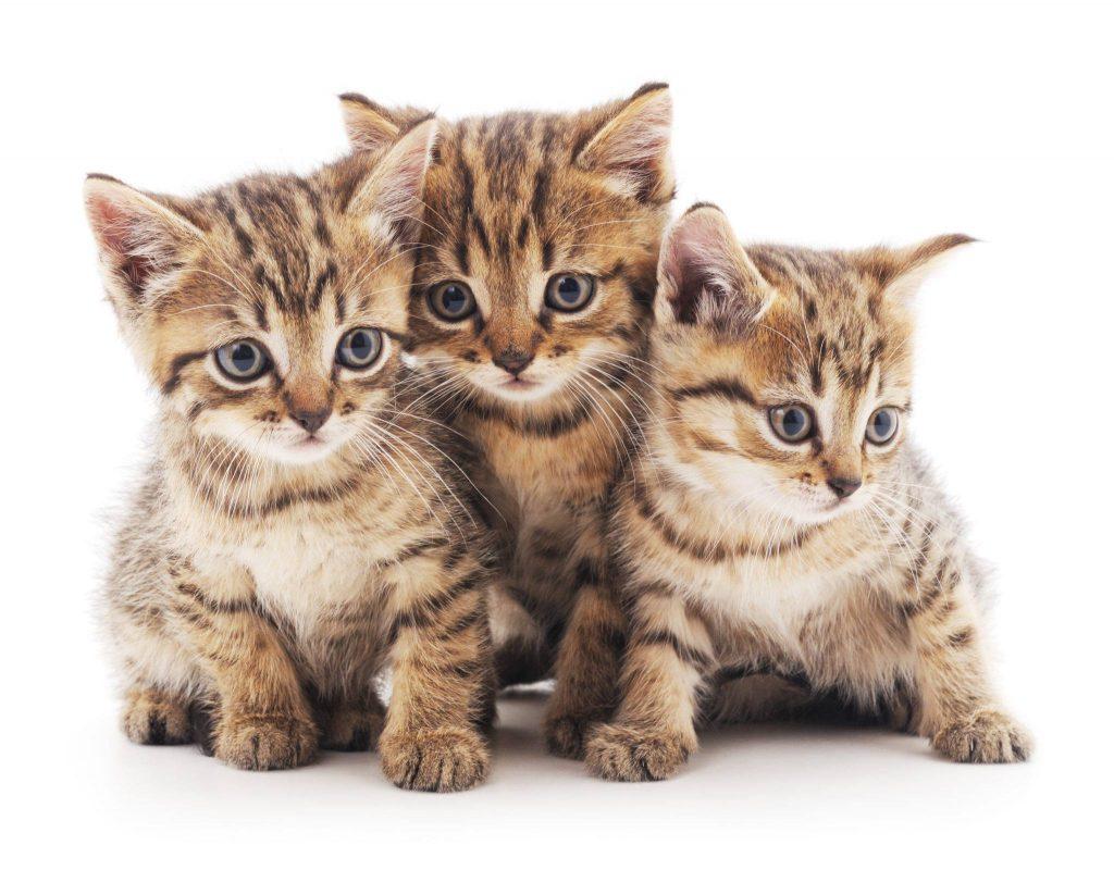 portare gatto irlanda