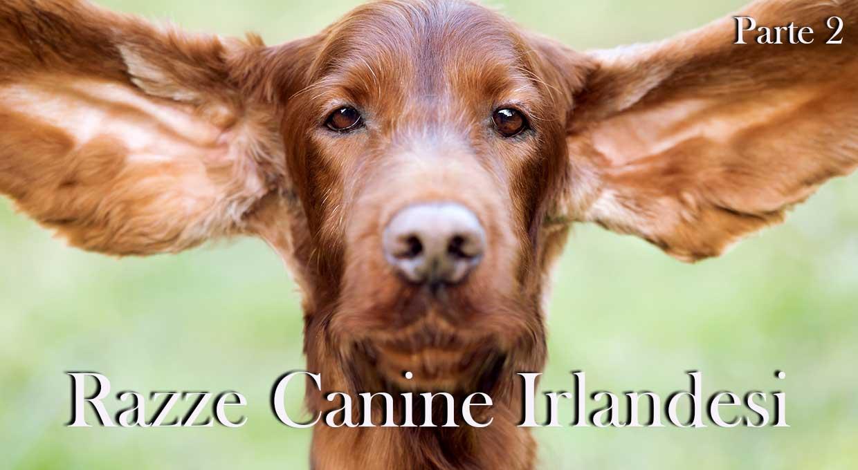Razze canine irlandesi