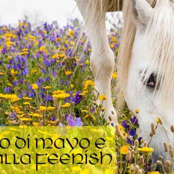 Il Ladro di Mayo e la Cavalla Feenish
