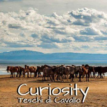 curiosity Teschi di Cavallo
