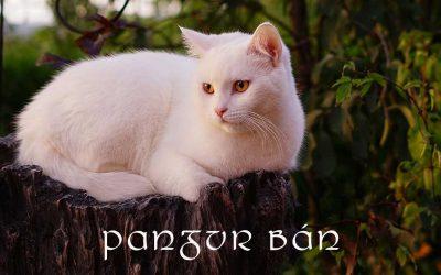 Curiosity – Pangur Bán
