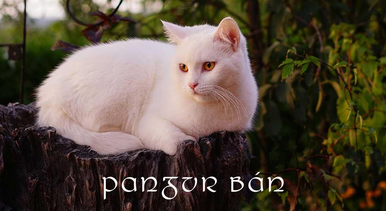 Pangur-Bán